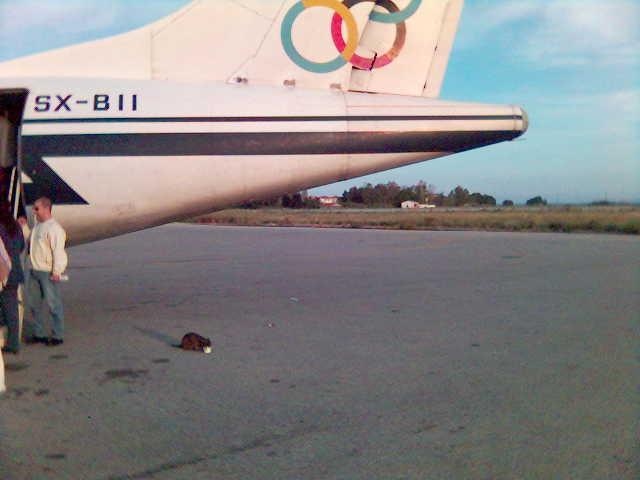 A cat enjoying its meal under an ATR-72